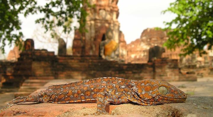 Reisevorbereitung_Thailand_Titel_Travel_Preparation