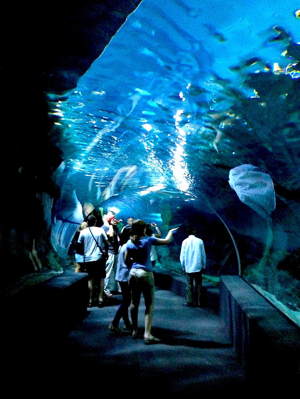 Siam Ocean World: Riesengroßes Aquarium im Bauch des Siam Shopping Centers