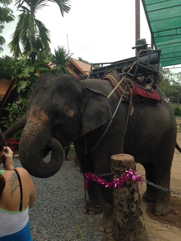 Elefant auf Koh Samui: Vor dem Ritt können die Elefanten mit Bananen gefüttert werden