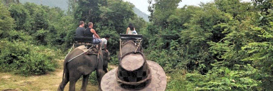 Elefantenfarm Thailand Koh Samui