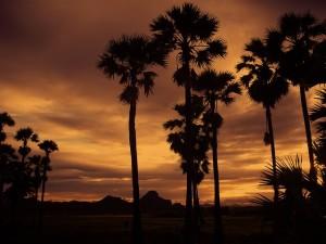 Thailand Palmen Sunset