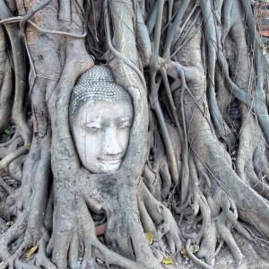 Ayutthaya Buddha Kopf Wat Mahathat