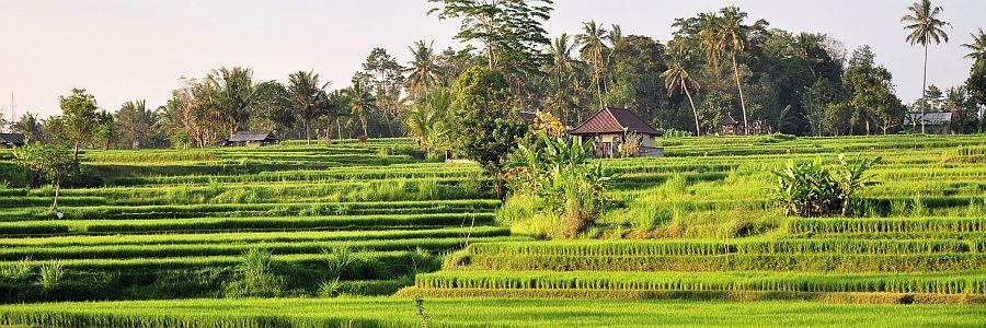 Bali Reisterassen