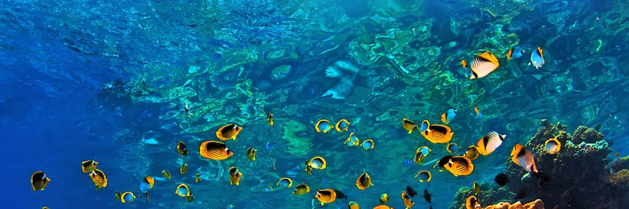 Coral Garden Koh Phi Phi Leh