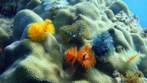 Korallen Thailand