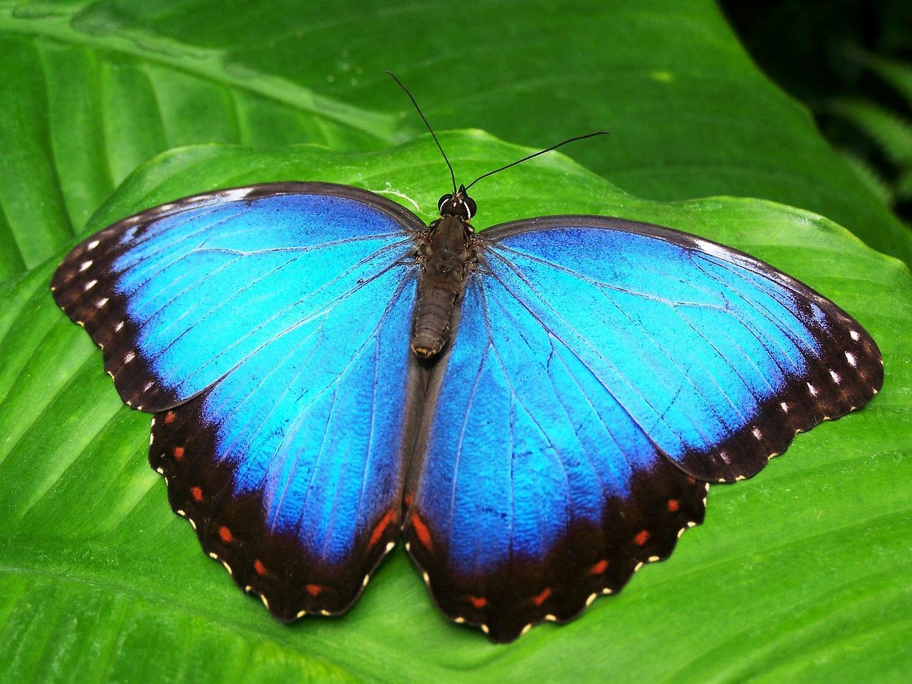 Schmetterlingsgarten Koh Samui Thailand
