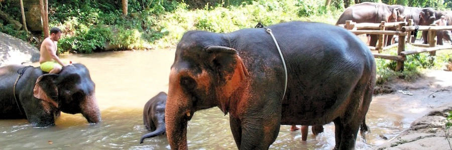 Badende Elefanten Thailand