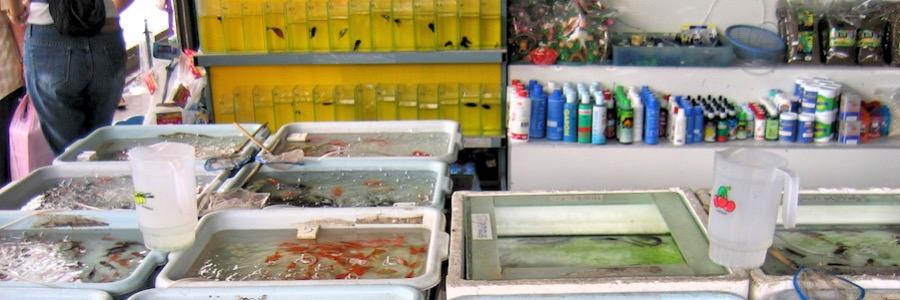 Chatuchak Weekend Market Fischverkauf