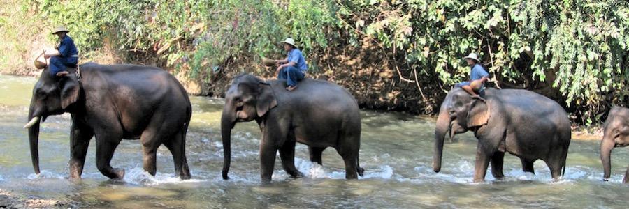 Elefantenfarm Thailand