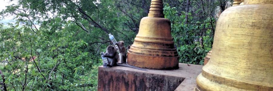 Freche Affen Thailand Tiger Cave Tempel