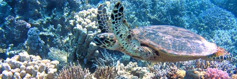 Schildkröte Thailand Unterwasserwelt