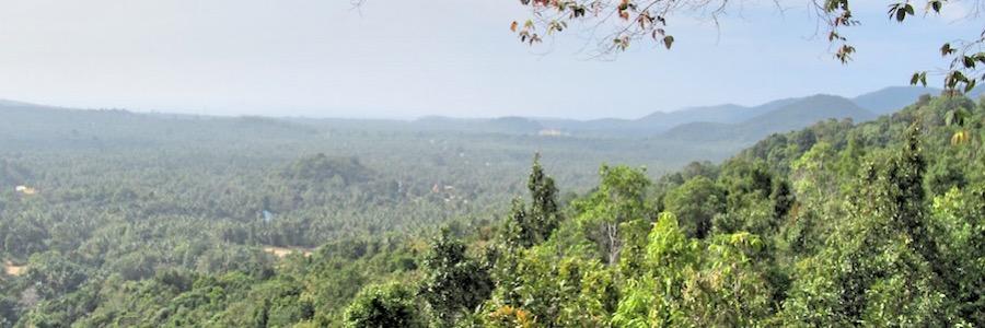 Dschungel Domesila Aussichtspunkt Koh Phangan