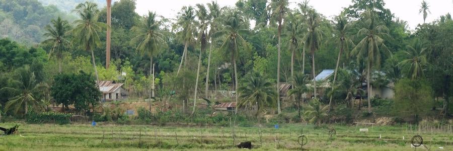 Koh Lanta Noi Dorf und Felder