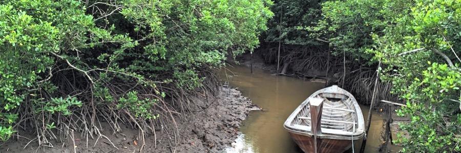 Mangrovenwald Koh Yao Yai